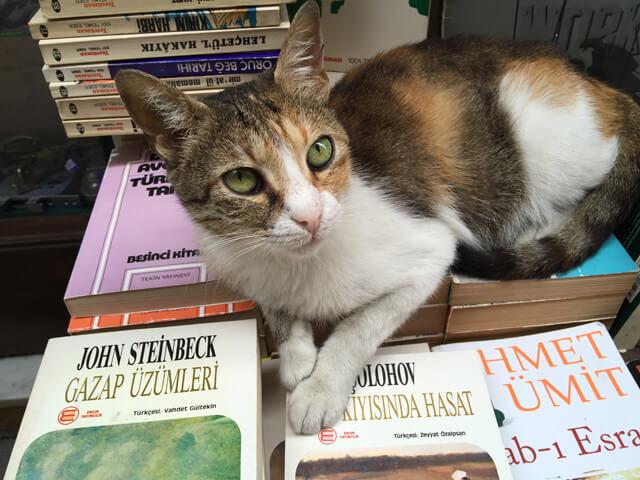 hurriyet-cumartesi-eki-kedi-kitap-haftasonu-etkinlik
